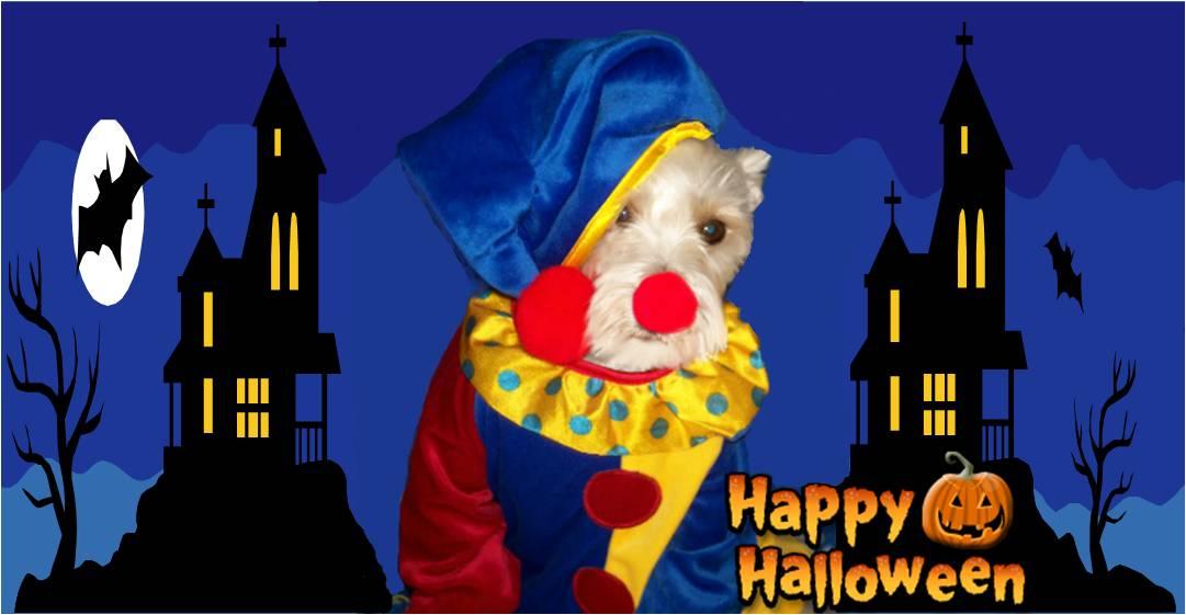 Happy Halloween Schnauzer Clown