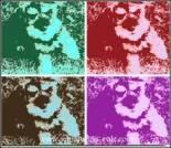 Dog e-card, dog ecard, schnauzer card