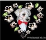 Love e-card, dog ecard, schnauzer card