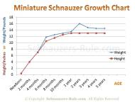 Miniature Schnauzer Growth Rate Chart