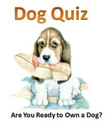 Are You Ready to Own a Dog Quiz