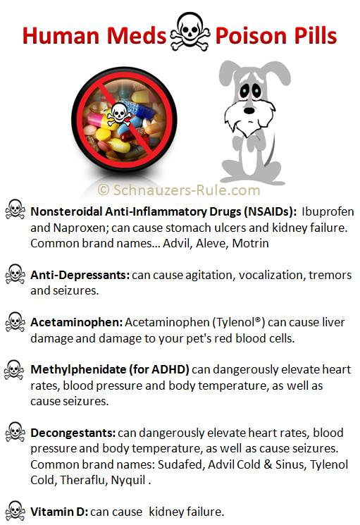 Human Medication Not Safe for Dogs