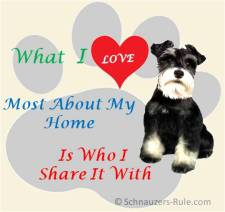 Home Is Where My Schnauzer Is