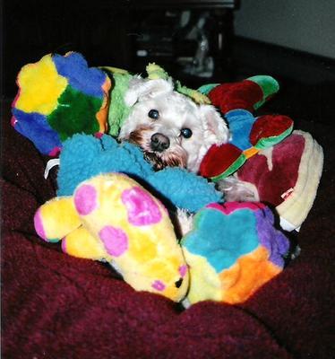 dog presents toys