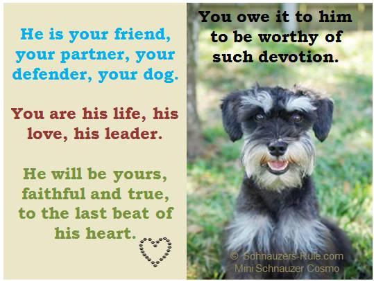 A Dog's Devotion