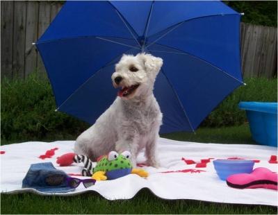 Summer Dog Heat Safety