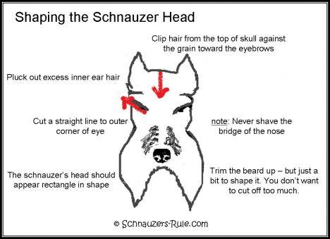 Groom Schnauzer Head