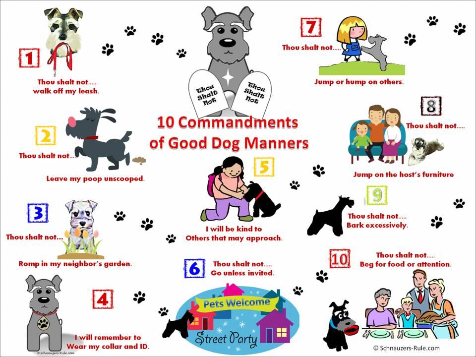 Dog Commandments Pet Etiquette