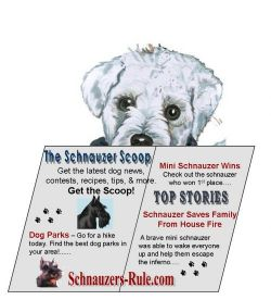 Schnauzer Scoop Dog News