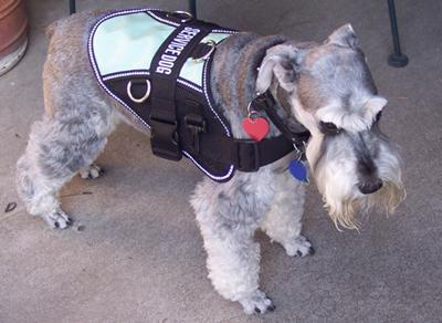 Boone was also my Service Dog