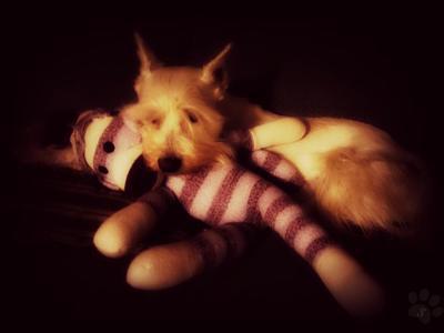 Me & my Pawple