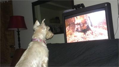 Adele loves watching Animal Planet