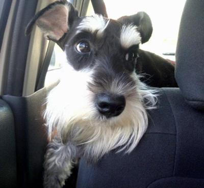 Casper loves car rides