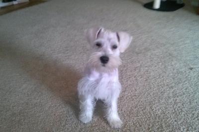 Charlies first hair cut