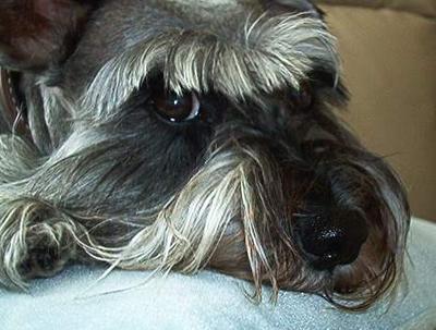 Danka 1997-2012 Best dog God ever made