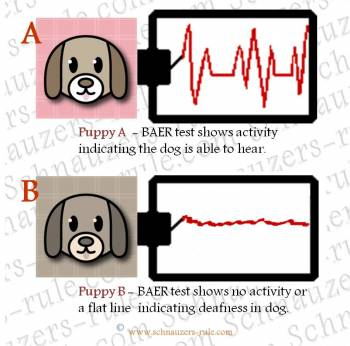 deaf dogs, deafness in dogs, BAER test