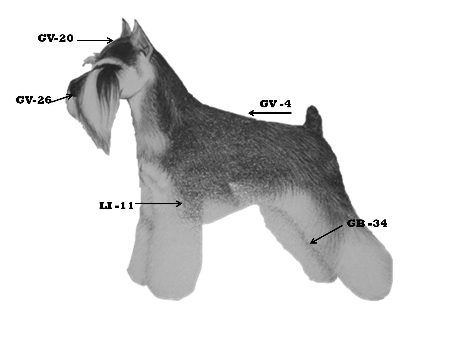 dog acupressure points