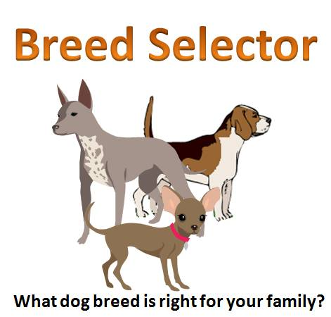 Which Dog Breed Is Right For Me Test