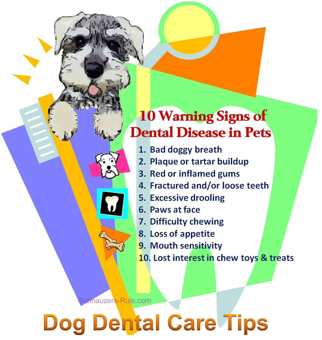 10 Warning Signs of Dental Disease in Pets