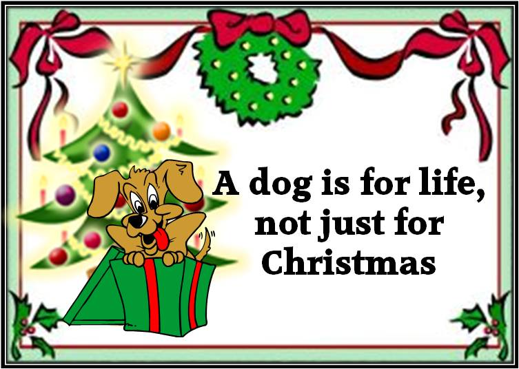dog for life, not for christmas