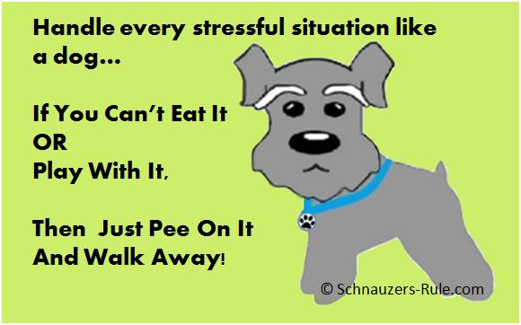 How Dogs Handle Stress