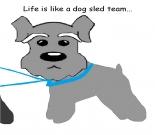 Cute Dog e-card, dog ecard, schnauzer card