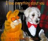 Love ecard, dog ecard, schnauzer card