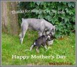Mother's Day ecard, dog ecard, schnauzer card