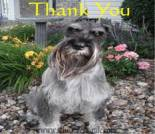 Thank You dog ecard, thanks ecard, dog ecard, schnauzer card