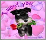 valentines day dog ecard
