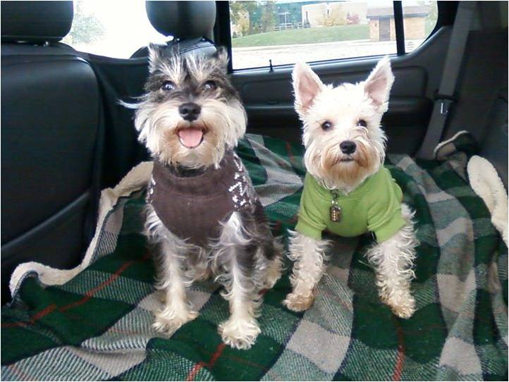 Pepper & Daisy