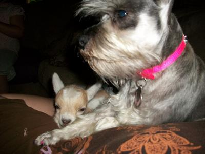 Gracie and Her Baby ( Baby Goat that is! )