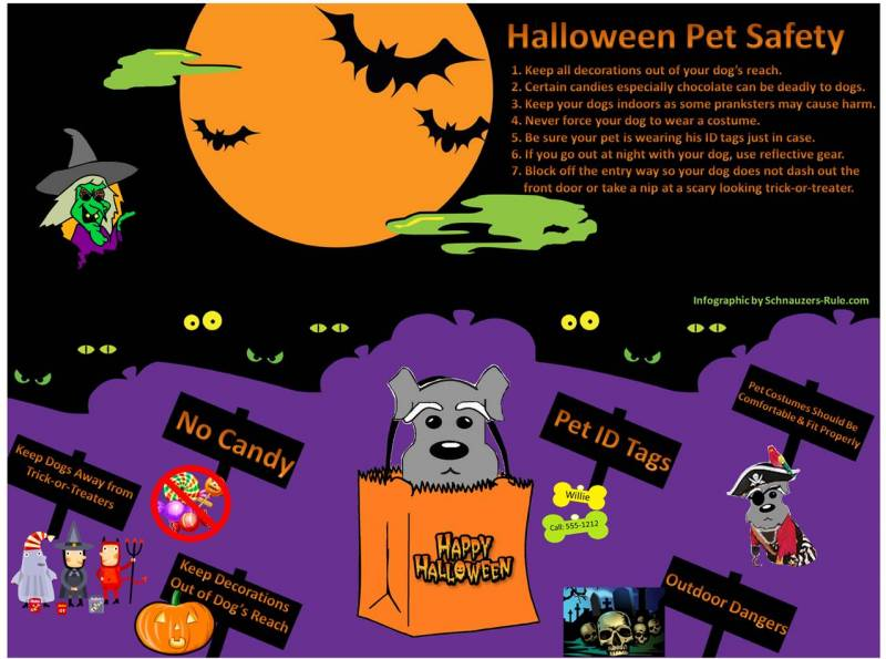 Halloween Pet Safety Infographic