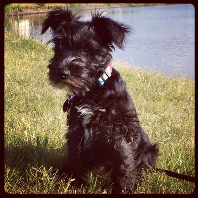 Hermes as a Puppy again