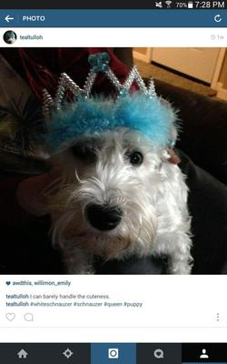 Georgie Gurl rocking the TEAL  tiara