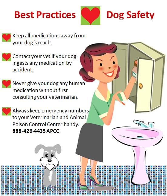 Dog Safety Precautions