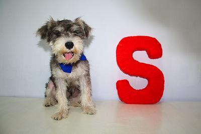 S for Suri