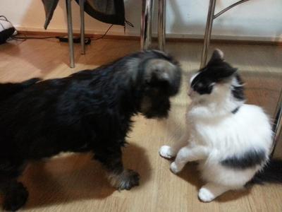 Saying hello to Kitty