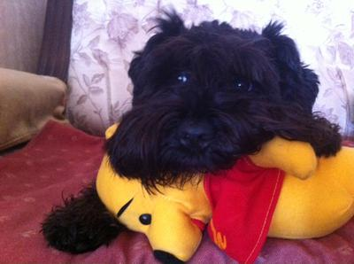 This is me sleeping on my favorite pooh