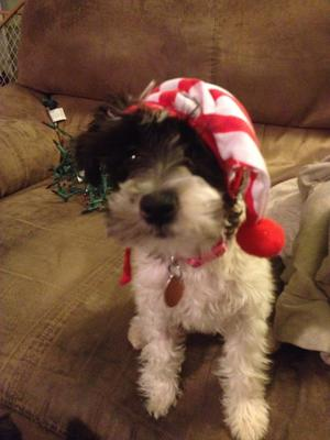 Marleigh Mae's First Christmas