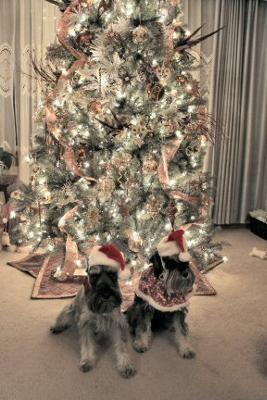 Max and Katrina Claus