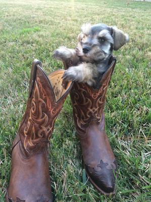 Max's Cowboy Boots