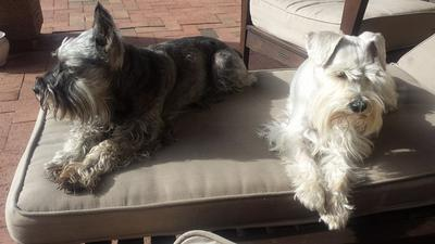 Dobby and Bella love the sun