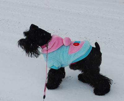 Bella enjoying the snow