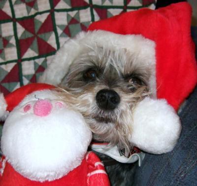Christmas Schnauzer Gumby
