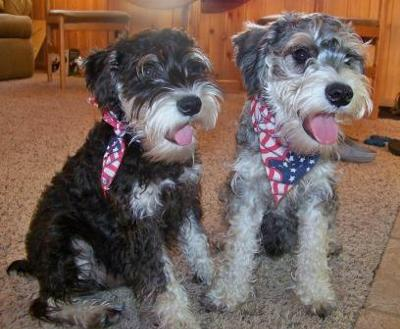 Patriotic Pooches Bogey and Boots