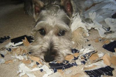 What fun Charlie had destroying this Lands' End shoebox!
