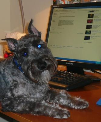Mini Schnauzer Blogger Luke