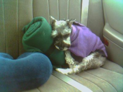 sleepy Mandi