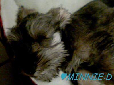 cutie sleeping